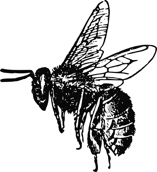 svg free library Bee drawing clip art. Bumble clipart sketch