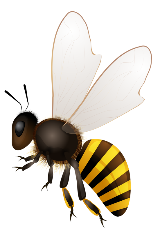 vector black and white library abeilles