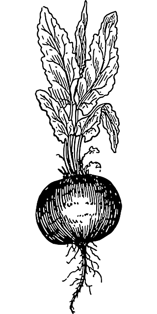 graphic royalty free library Beets drawing. Beet tattoo tattoos and