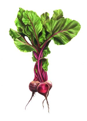 jpg black and white download Beets sam luotonen samantha. Beet drawing colored pencil