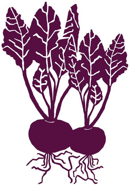 banner royalty free Beetroot illustration www rosavitalie. Beets drawing simple