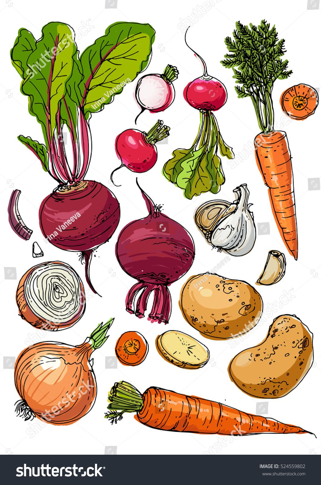 picture freeuse library Beet drawing radish. Set of colored vegetables