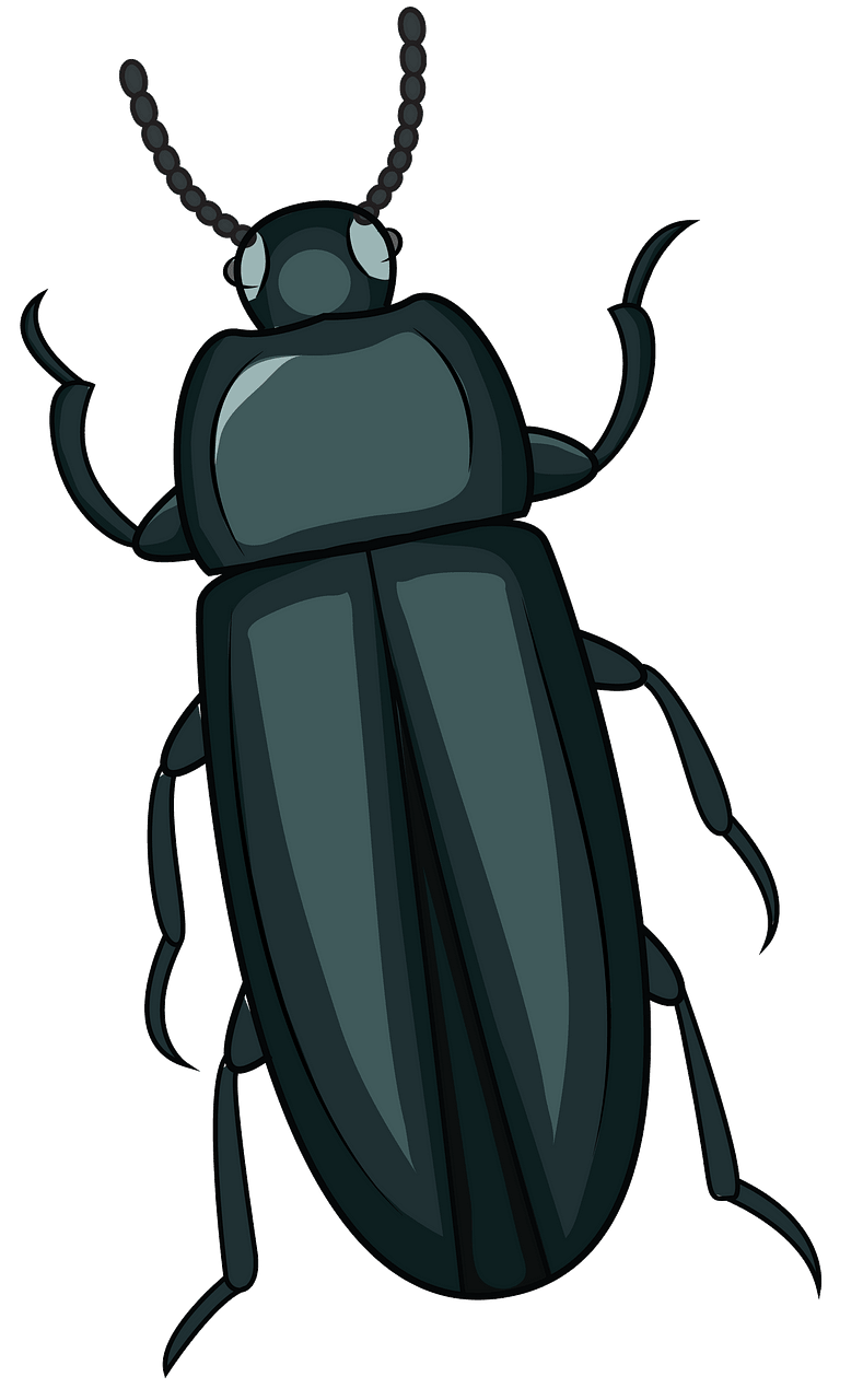 clip art library stock Mealworm free download creazilla. Beetle clipart.