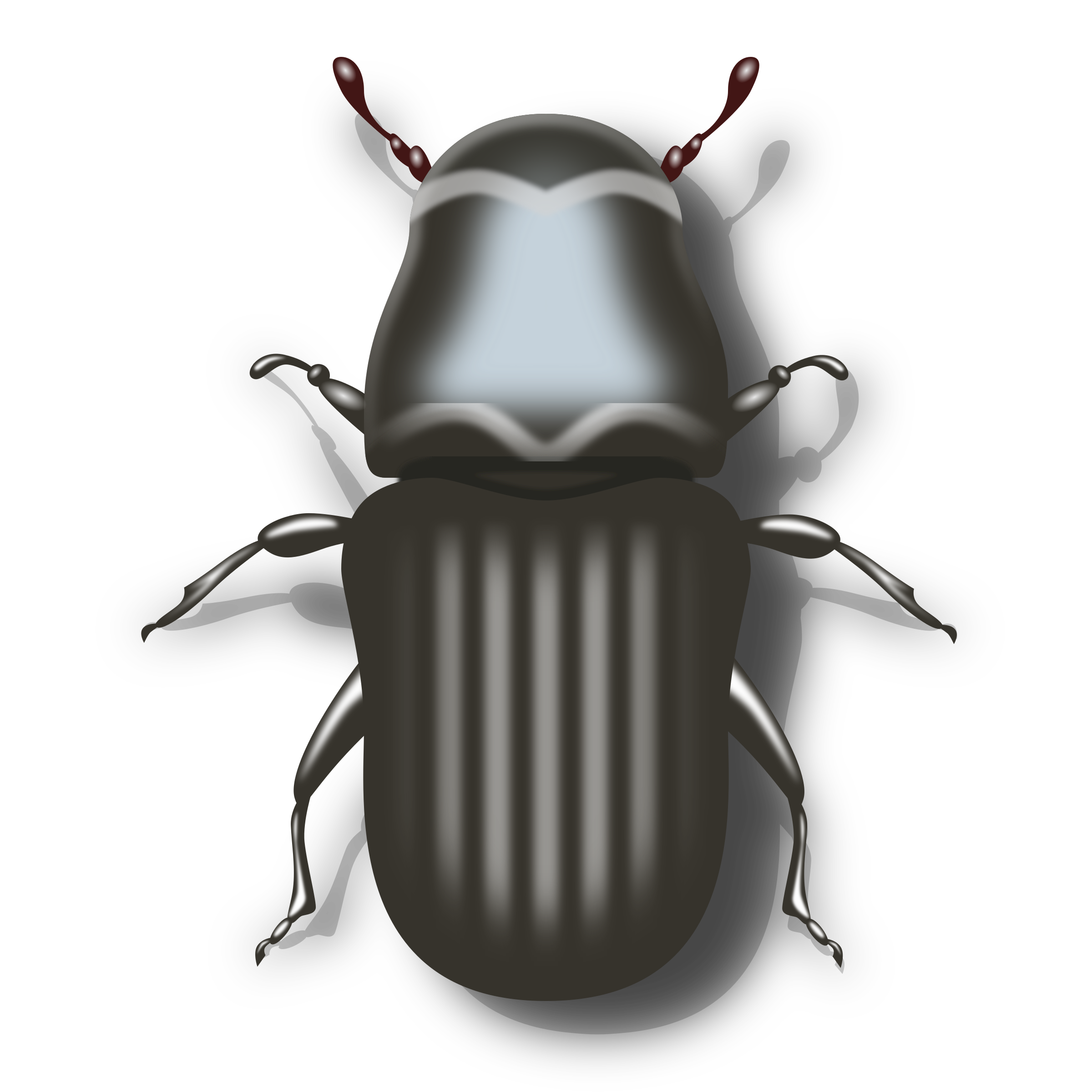 png royalty free library Bugs clipart darkling beetle. Pine big image png.
