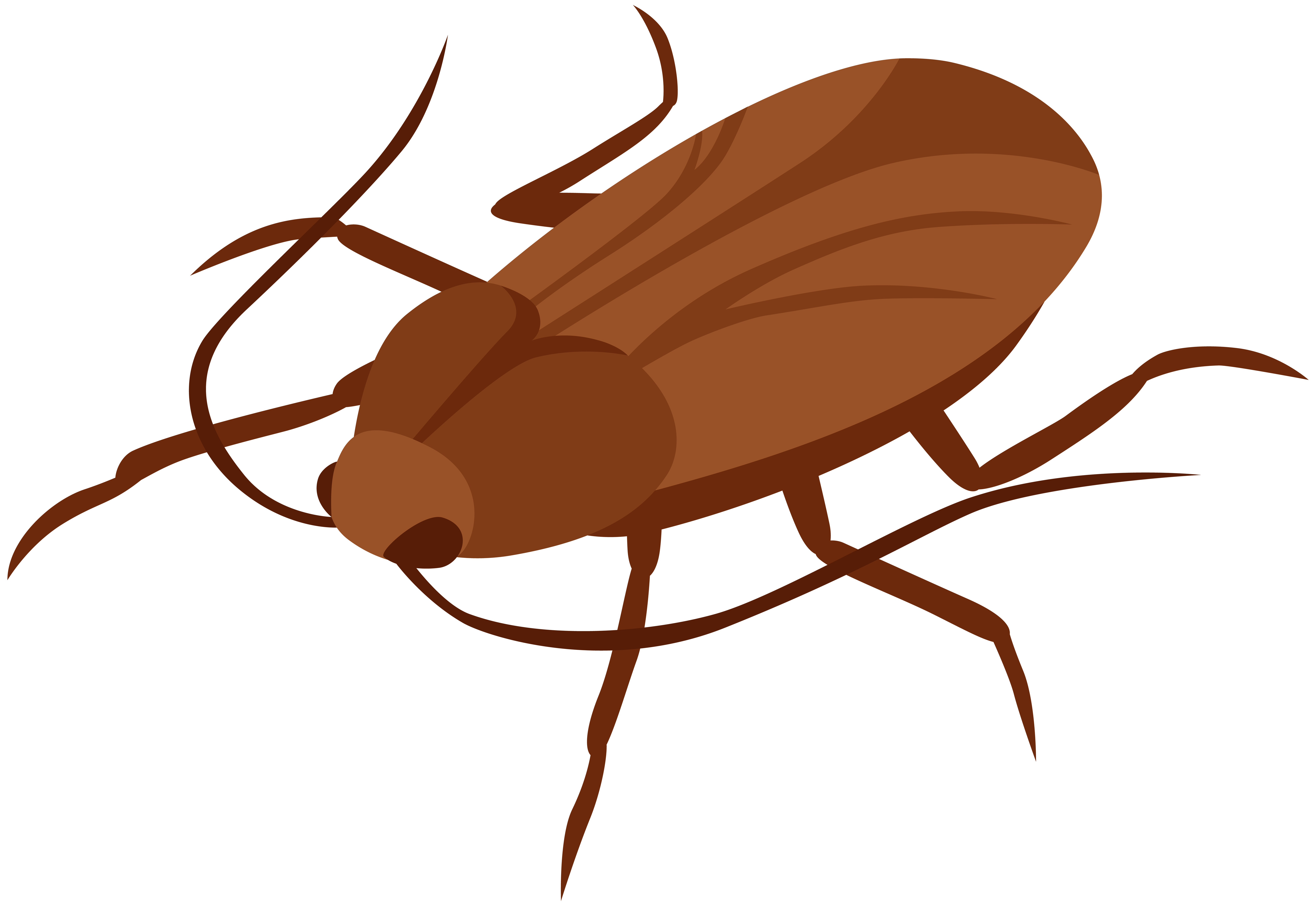 graphic download Cockroach png clip art. Beetle clipart arthropod.
