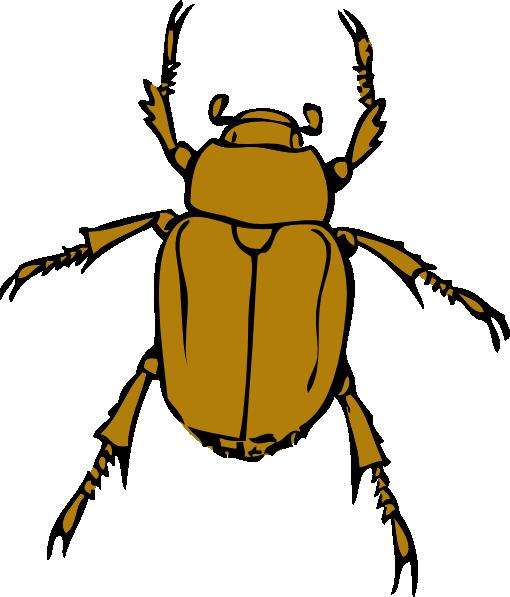 graphic transparent stock Beetle clipart arthropod. Beetles .