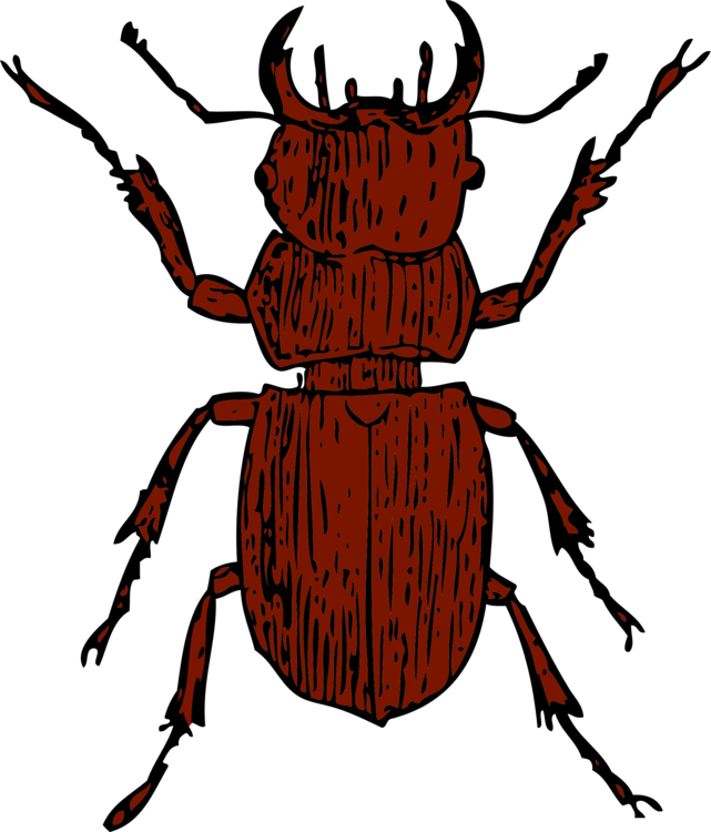 clip black and white Beetle clipart arthropod. Stag lucanini drawing free.