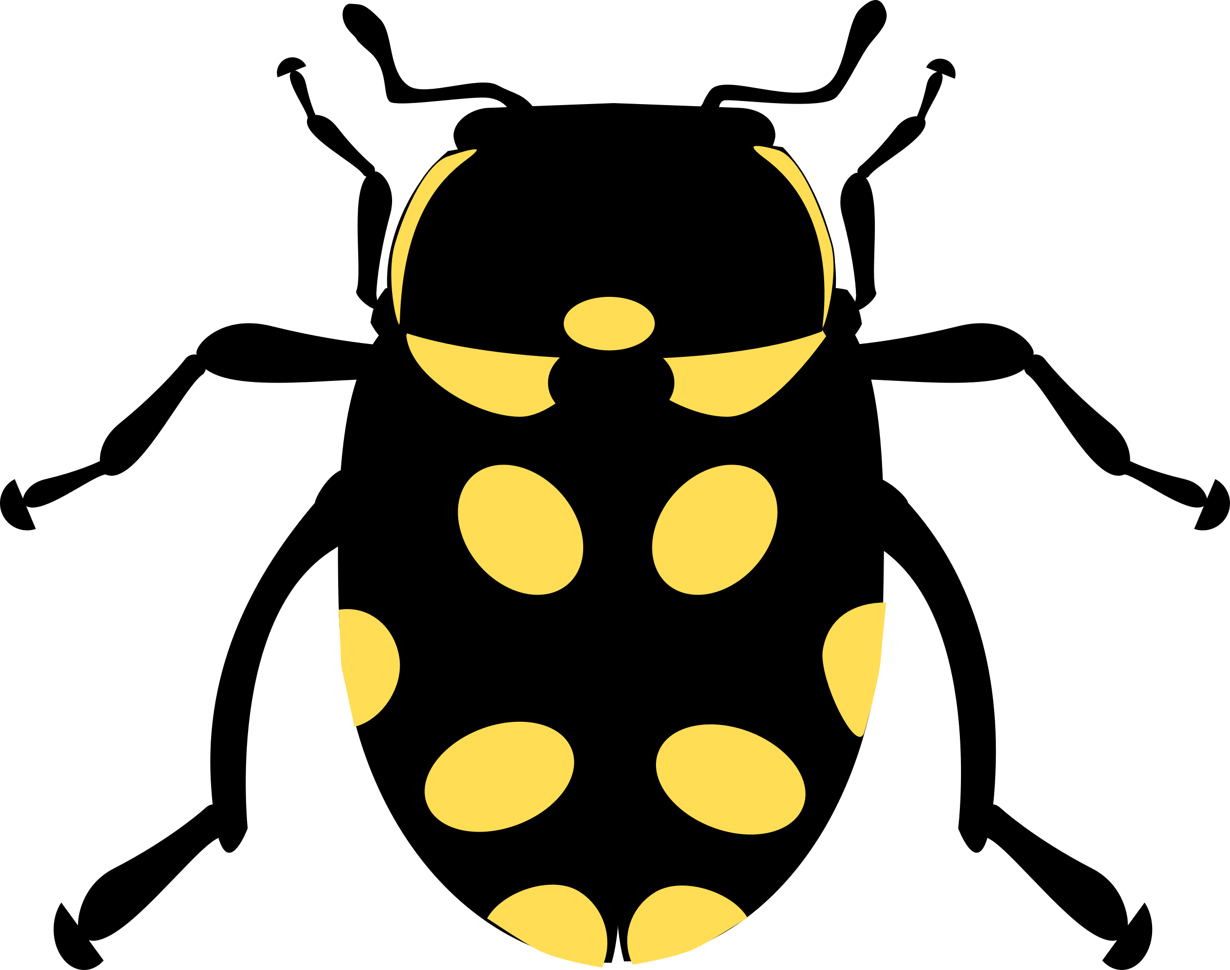 jpg freeuse library Eriopis canrash bug big. Beetle clipart arthropod.