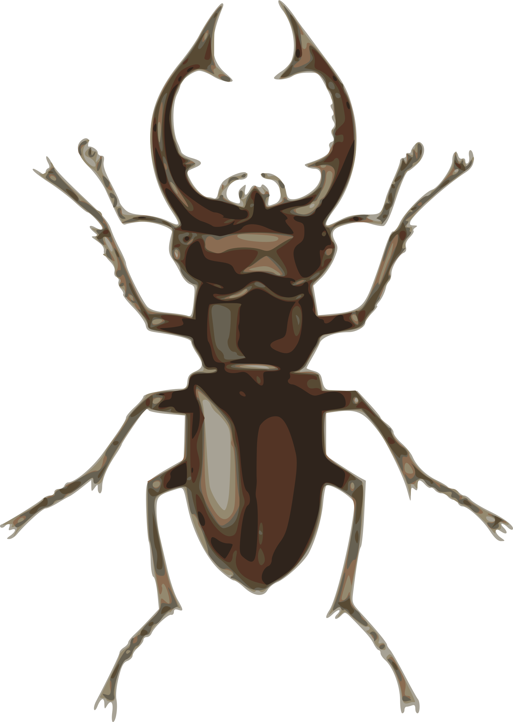 clipart transparent library Lucanus elephas big image. Beetle clipart stag beetle.