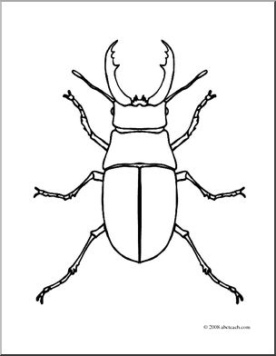 free download Clip art insects coloring. Beetle clipart stag beetle.