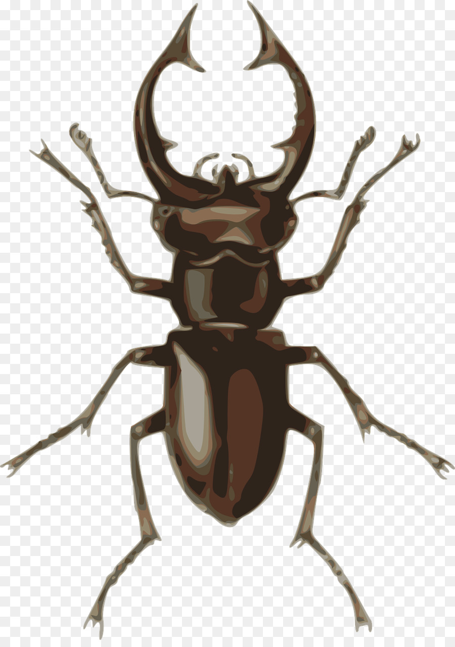 jpg black and white download Beetle clipart stag beetle. Png clip art .