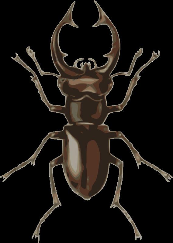 freeuse download Lucanus elephas medium image. Beetle clipart stag beetle.