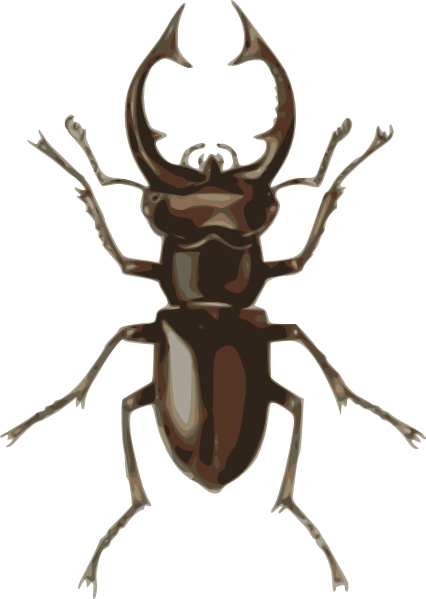 free Staghorn pencil and in. Bug clipart beetle