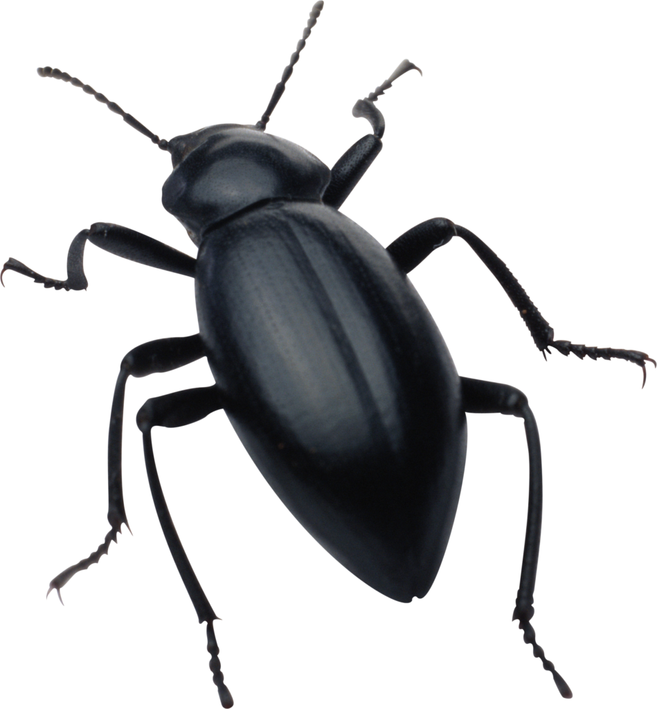 clipart royalty free library Beetle clipart transparent background. Insect png peoplepng com.