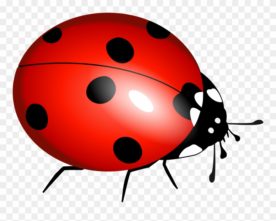 graphic free library True bug lady . Beetle clipart transparent background.