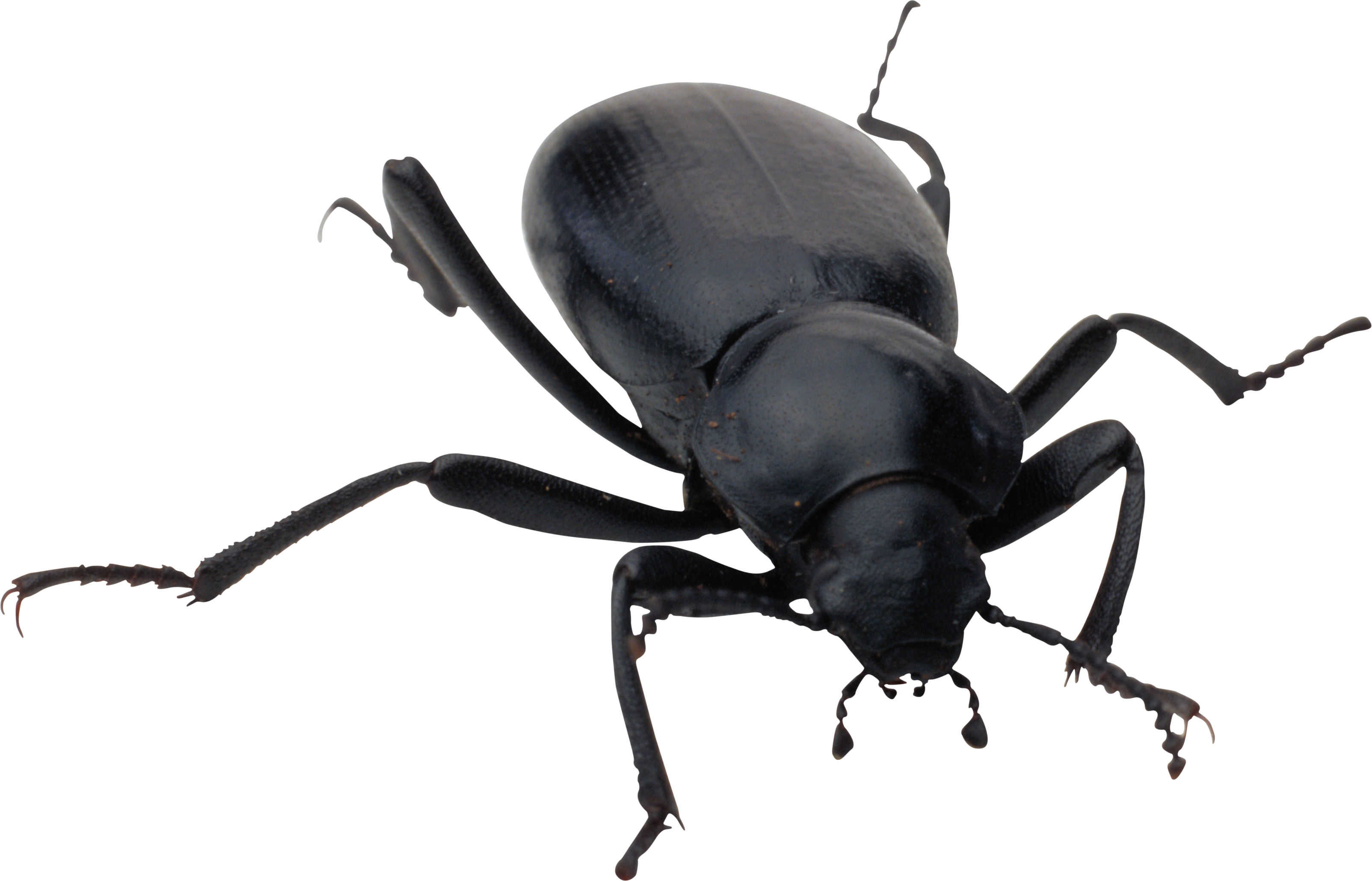 clipart black and white library Beetle clipart transparent background. Bugs icon web icons.