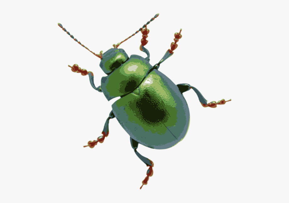 svg freeuse Beetle clipart transparent background. Clip art of a.