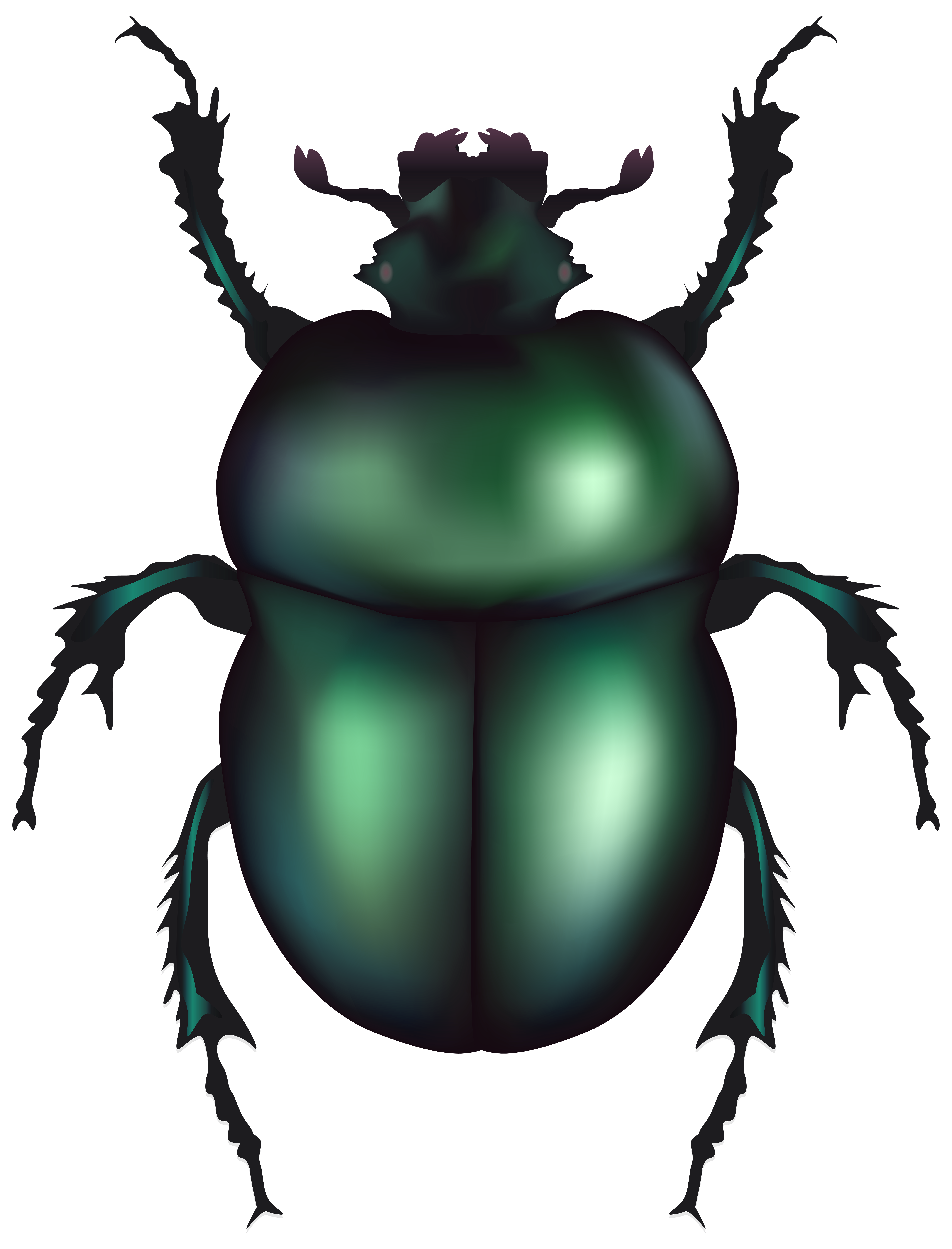 svg stock Beetle clipart. Green rose chafer png.