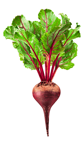 svg transparent download Beets drawing easy.  pinterest beetroot