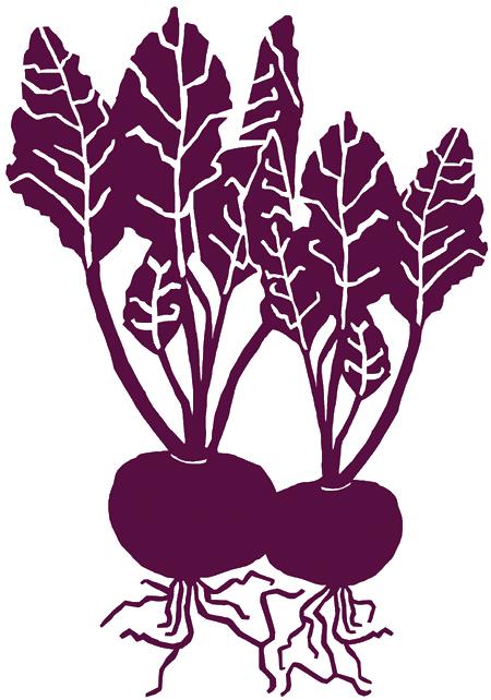 png transparent download Beets drawing ink. Beetroot illustration www rosavitalie