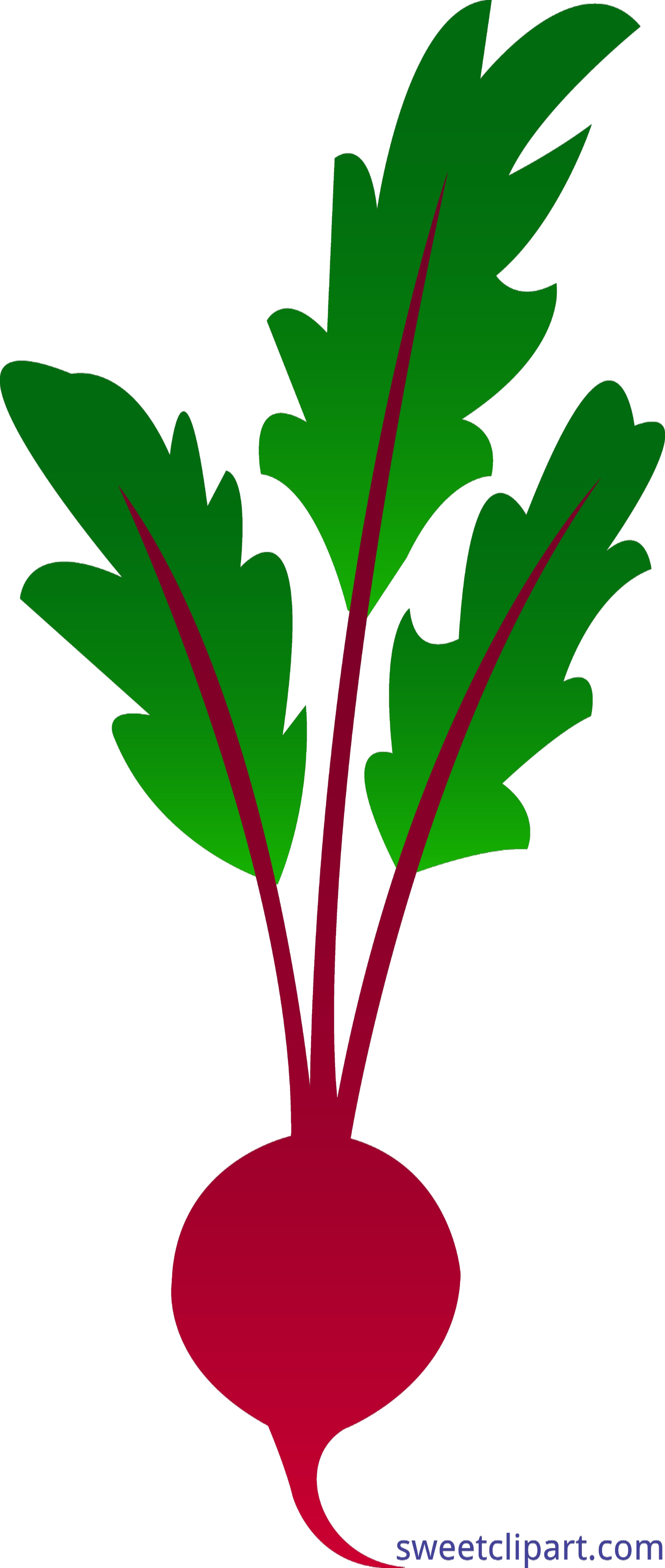 graphic stock Beet encode clipart to. Beets drawing logo beats