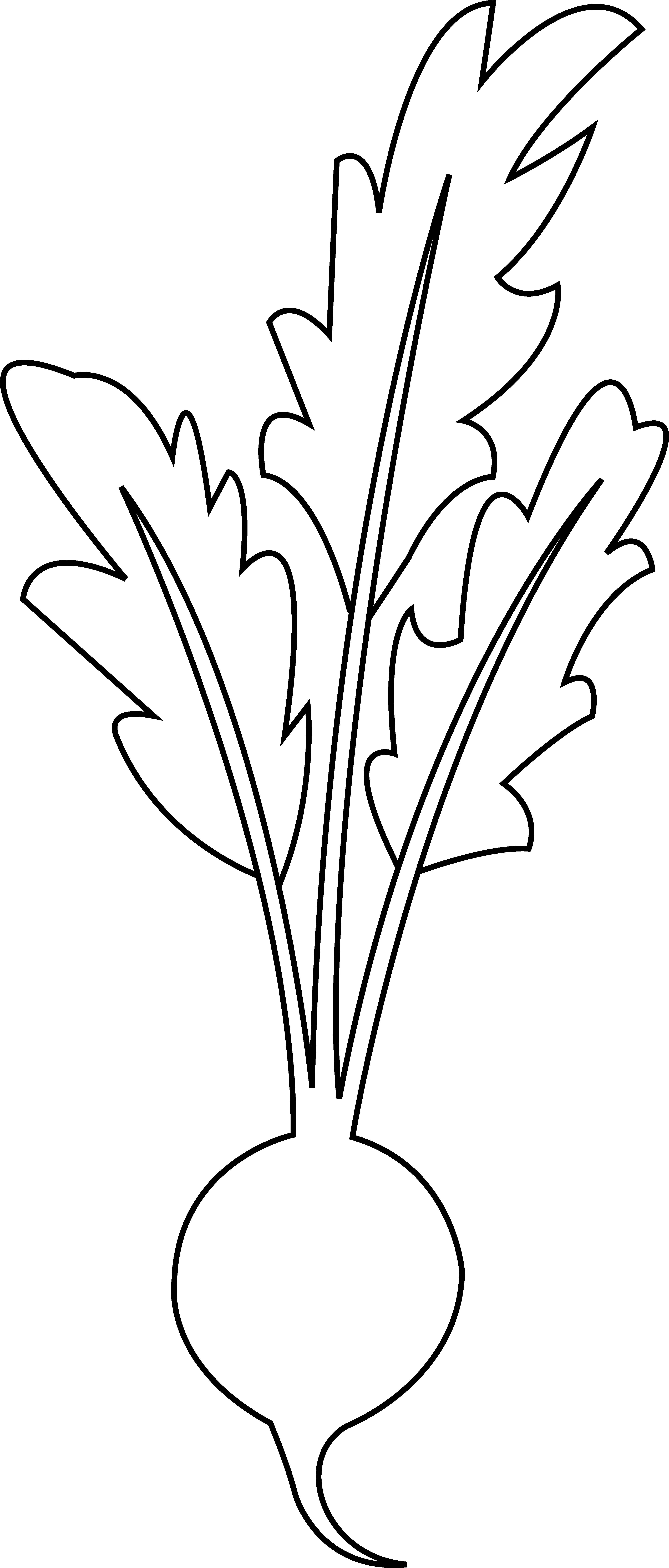 jpg black and white library Beet line art free. Beets drawing music