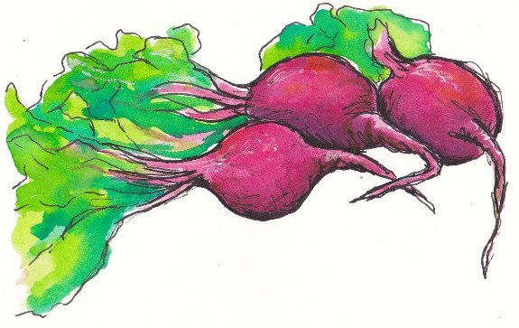 stock Beets drawing visual. Tracey fletcher king beet