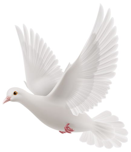 jpg royalty free stock White Dove PNG Clipart