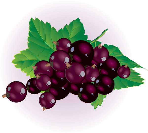 clipart transparent Free fall cliparts download. Berries clipart