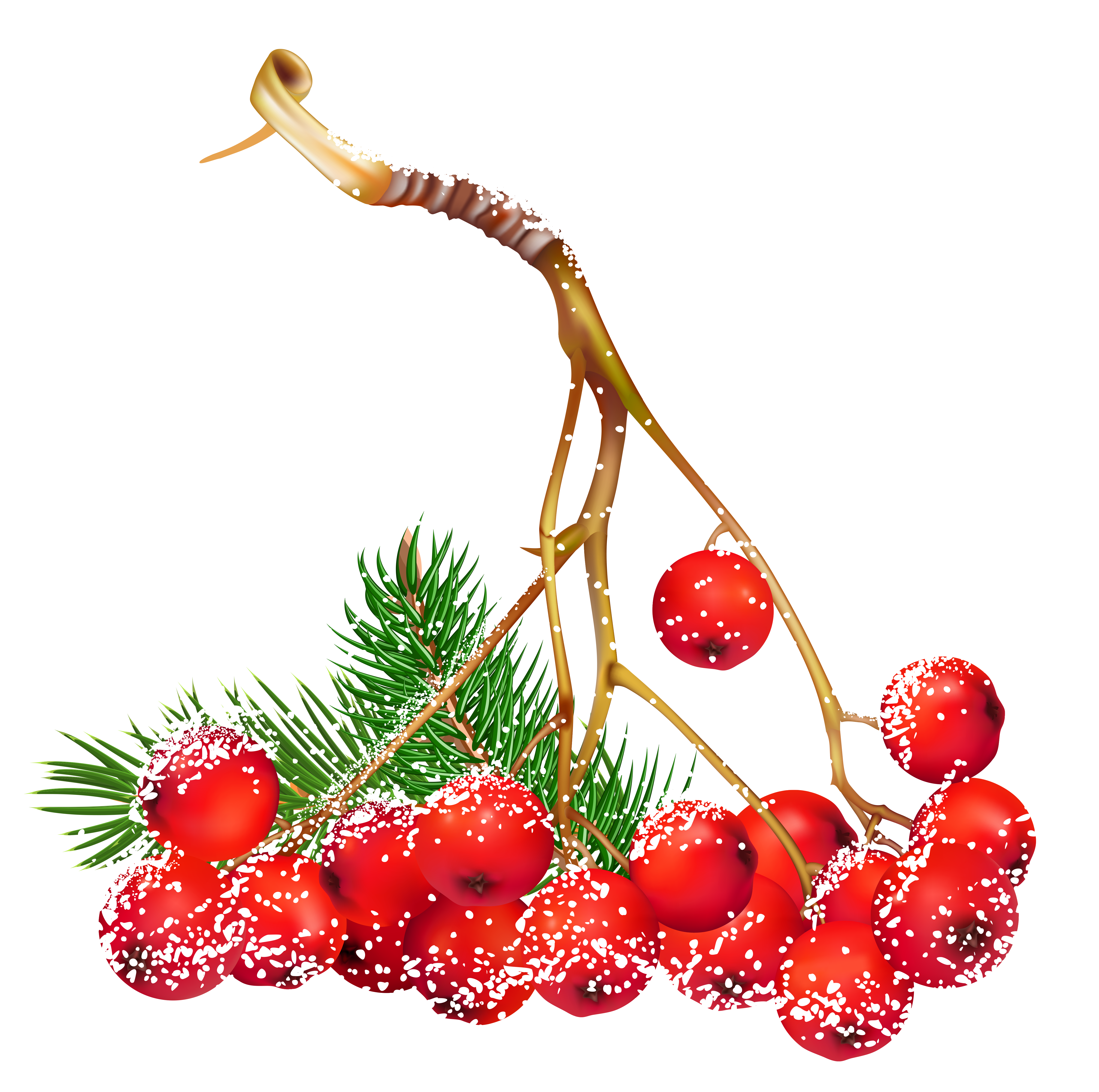 vector freeuse Berries clipart. Transparent christmas snowy holly