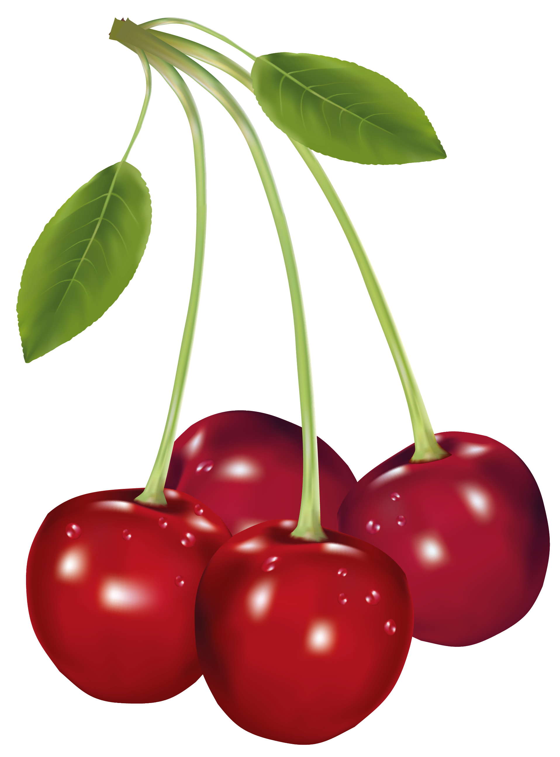 clip art stock Cherry clipart furits. Cherries png picture gallery.