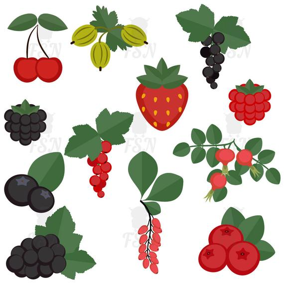 clip art free stock Berries clipart vector. Juicy digital clip art
