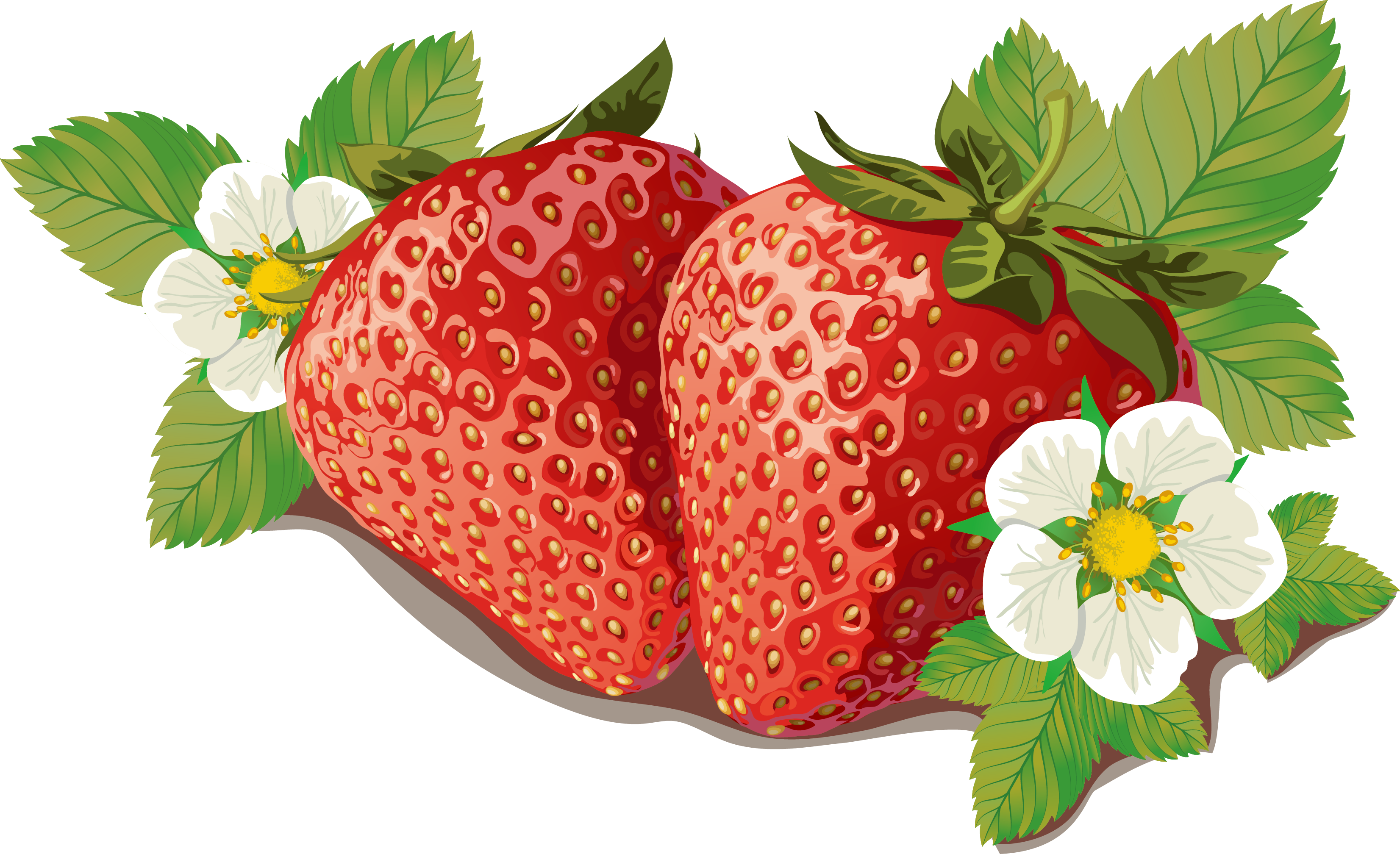 clipart free stock Strawberry marmalade label template. Berries clipart vector