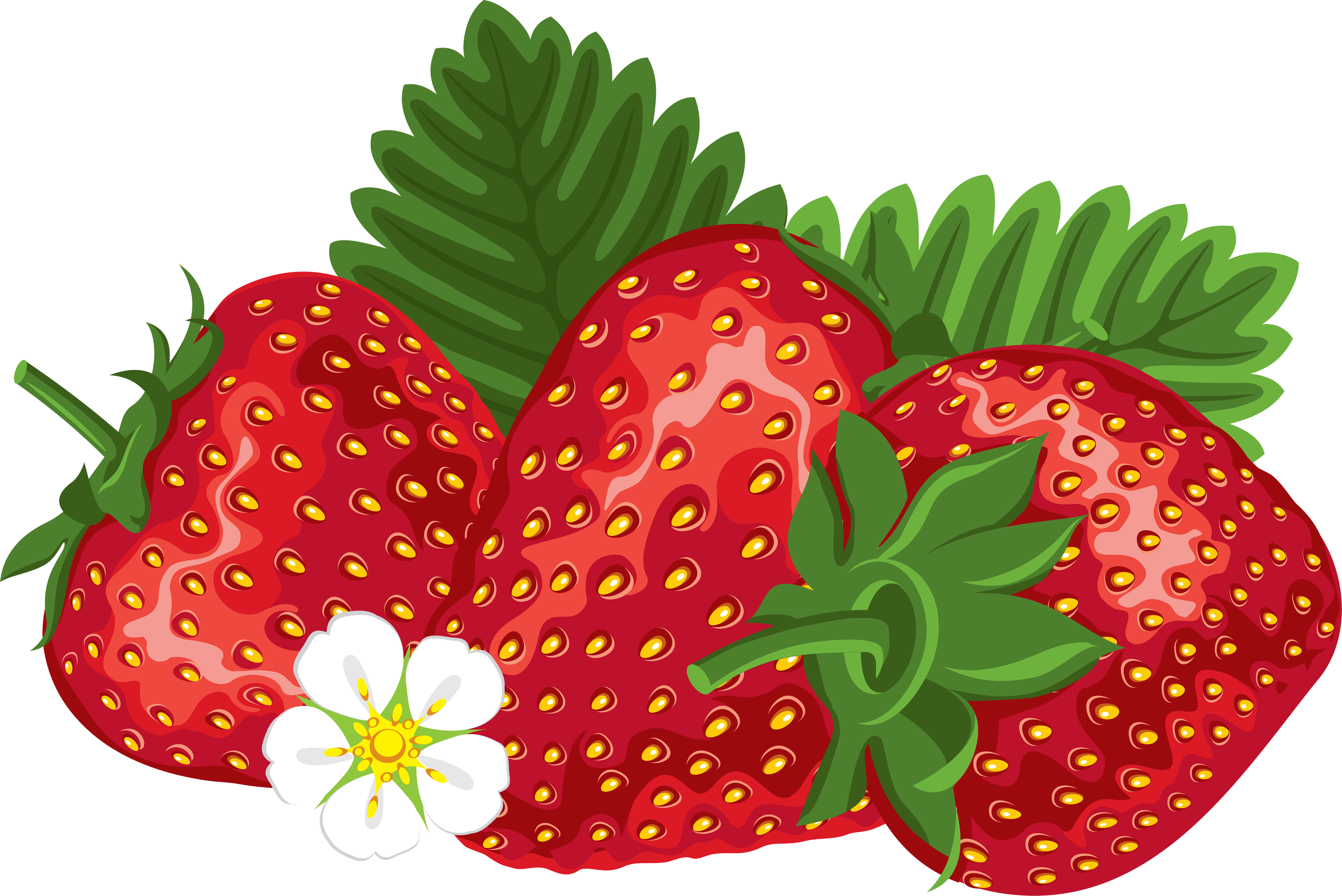 svg freeuse library Drawing strawberries strawberry plant. Png image purepng free