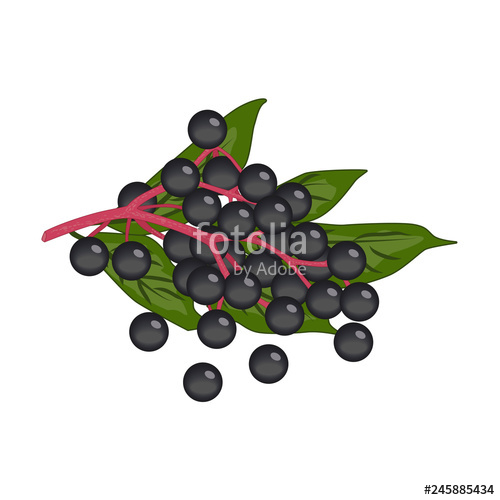 graphic free download Bunch of small black. Berries clipart vector