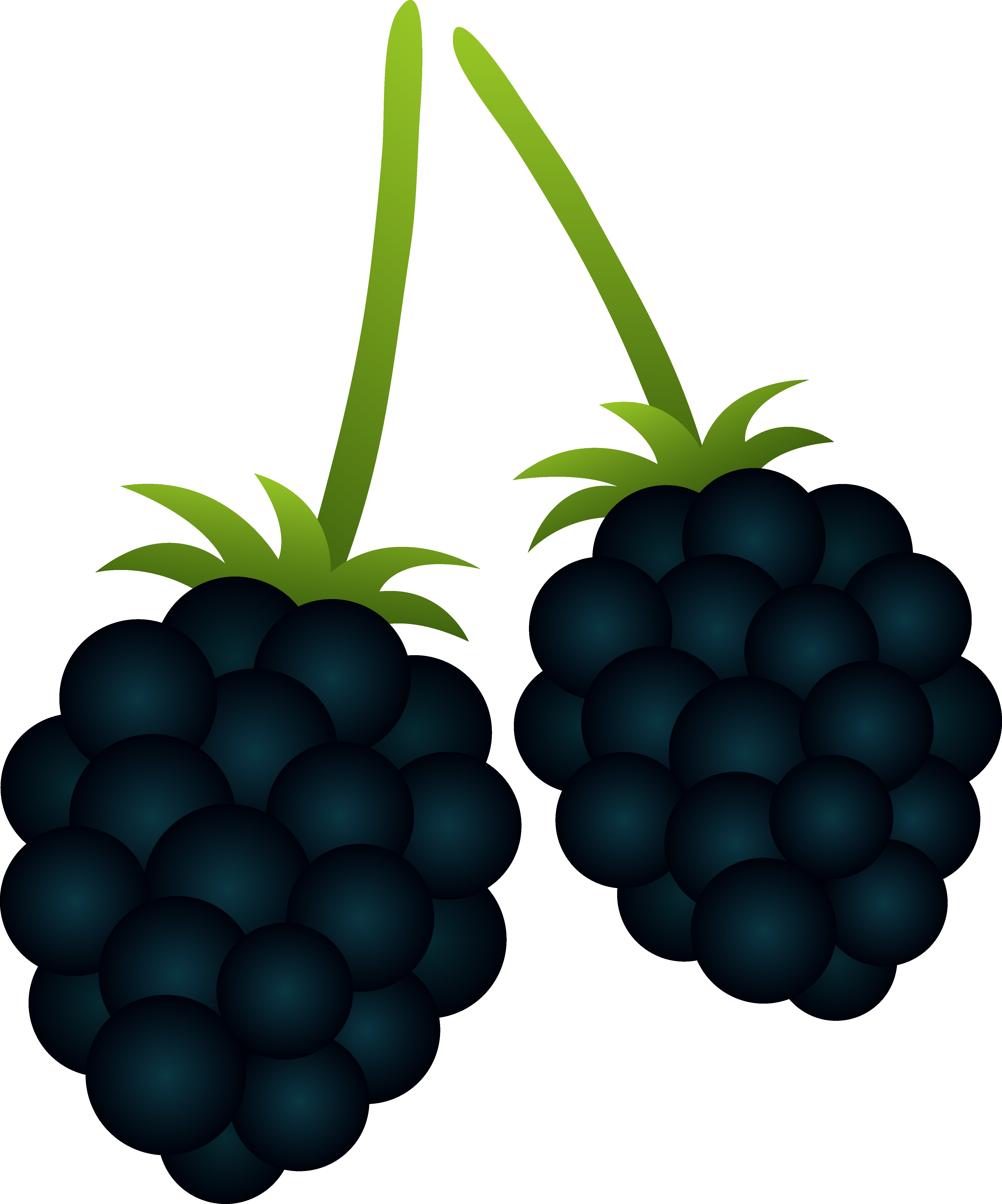 clipart download Two blackberries free clip. Berry clipart berry basket