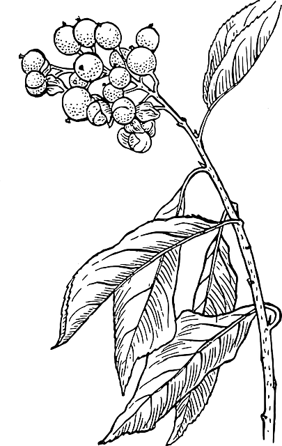 vector black and white stock Free Image on Pixabay