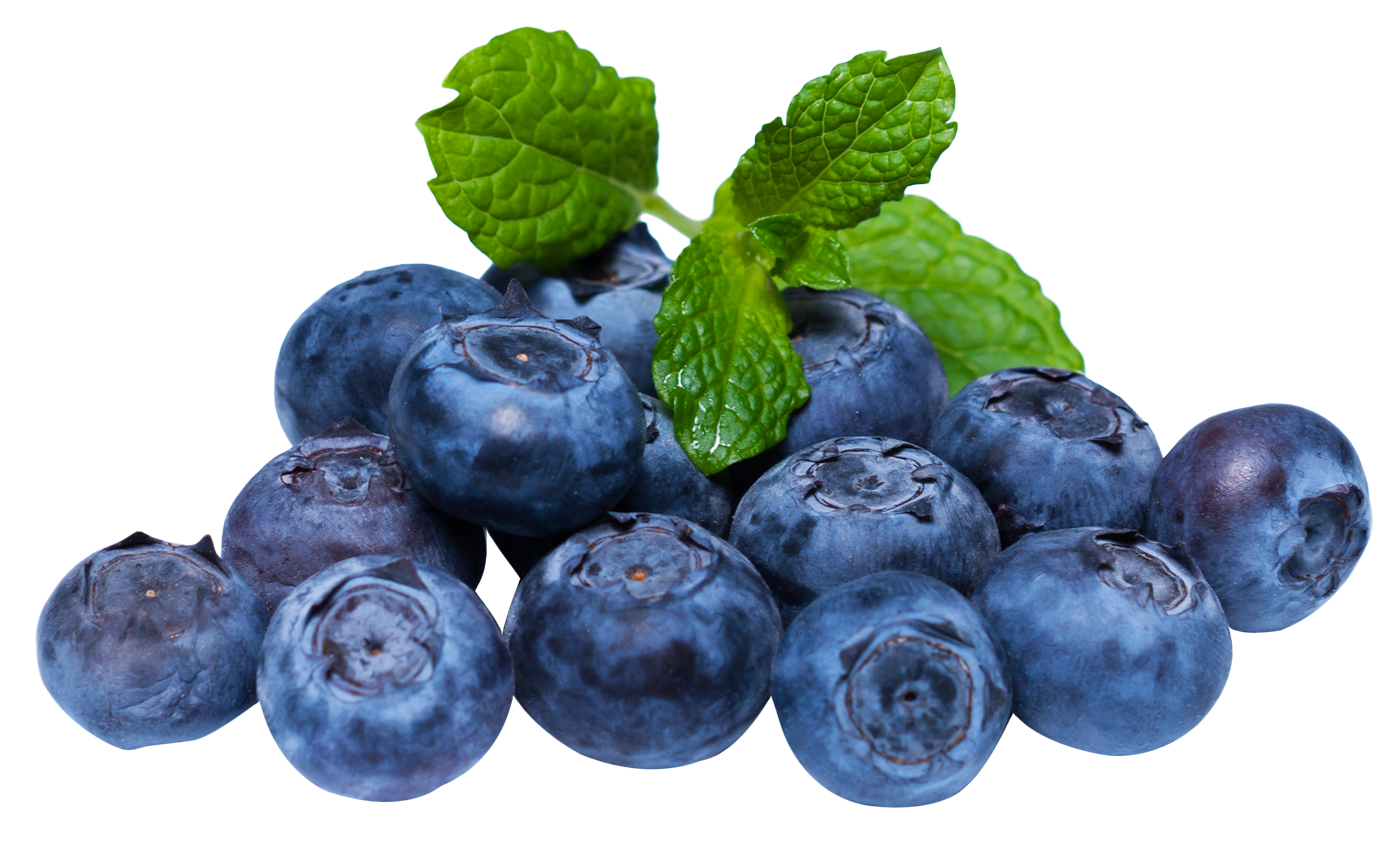 black and white library Png image purepng free. Transparent fruit blueberry