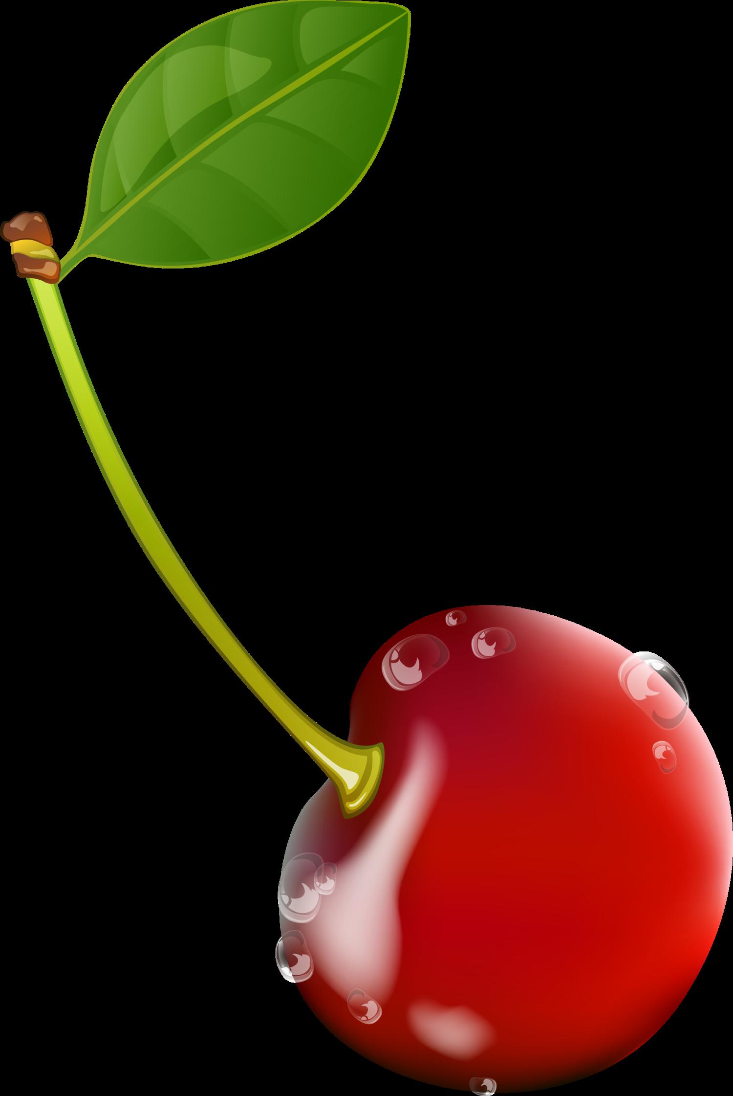 jpg free Cherry Drawing Red
