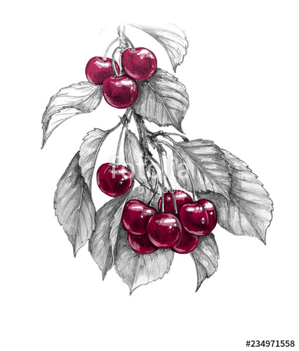 png royalty free download Sweet branch with red. Berry drawing cherry