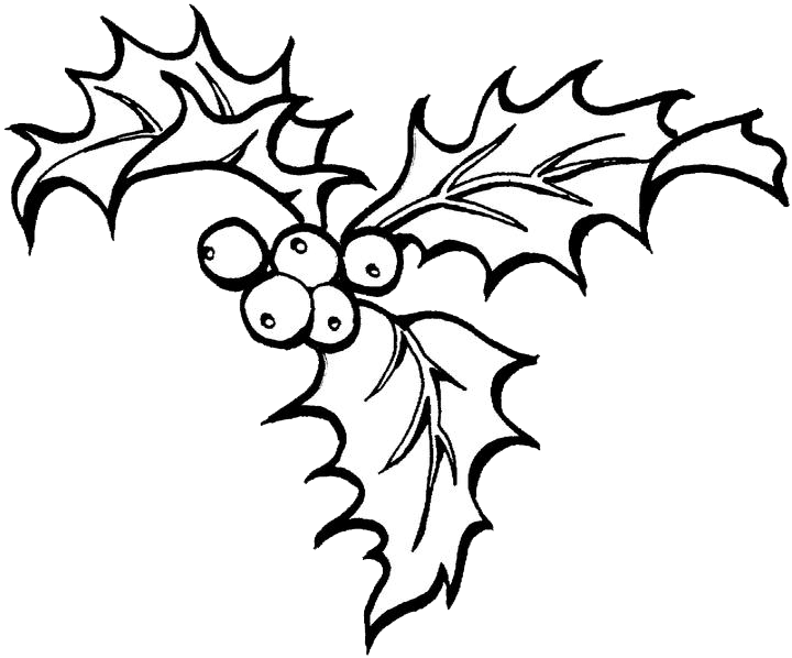 clipart free stock Christmas Holly Drawing at GetDrawings