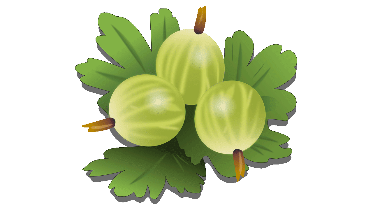 graphic royalty free stock Collection of free Gooseberries clipart png