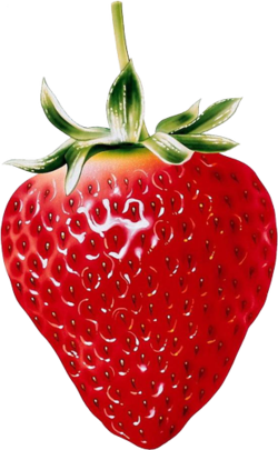 image free library Drawing strawberries colored pencil. Tubes fruits frutas pinterest