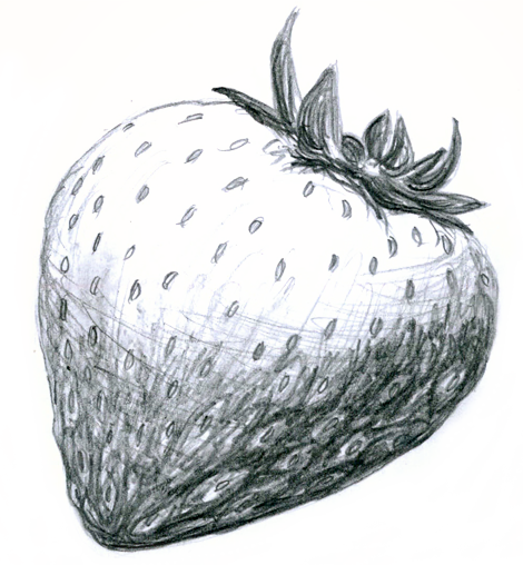 clip freeuse download Drawing strawberries sketch.  collection of strawberry