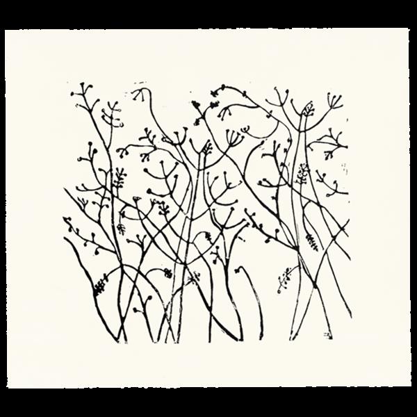 vector transparent library Winter Berries