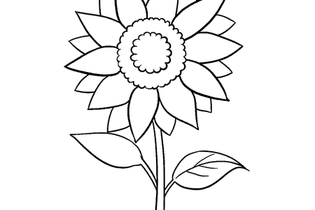 graphic transparent step by step instructions on how to draw a flower