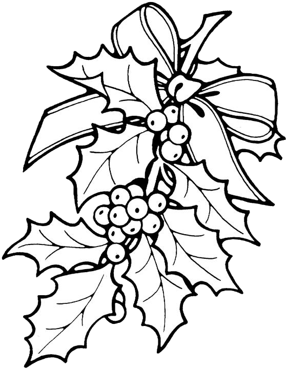 clipart download Holly Drawing at GetDrawings