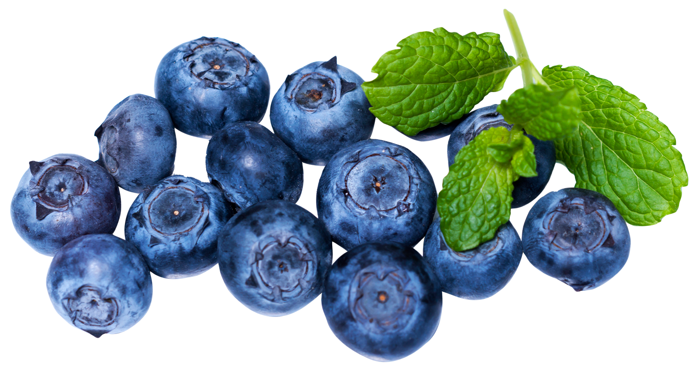 svg royalty free stock Blueberries PNG images free download