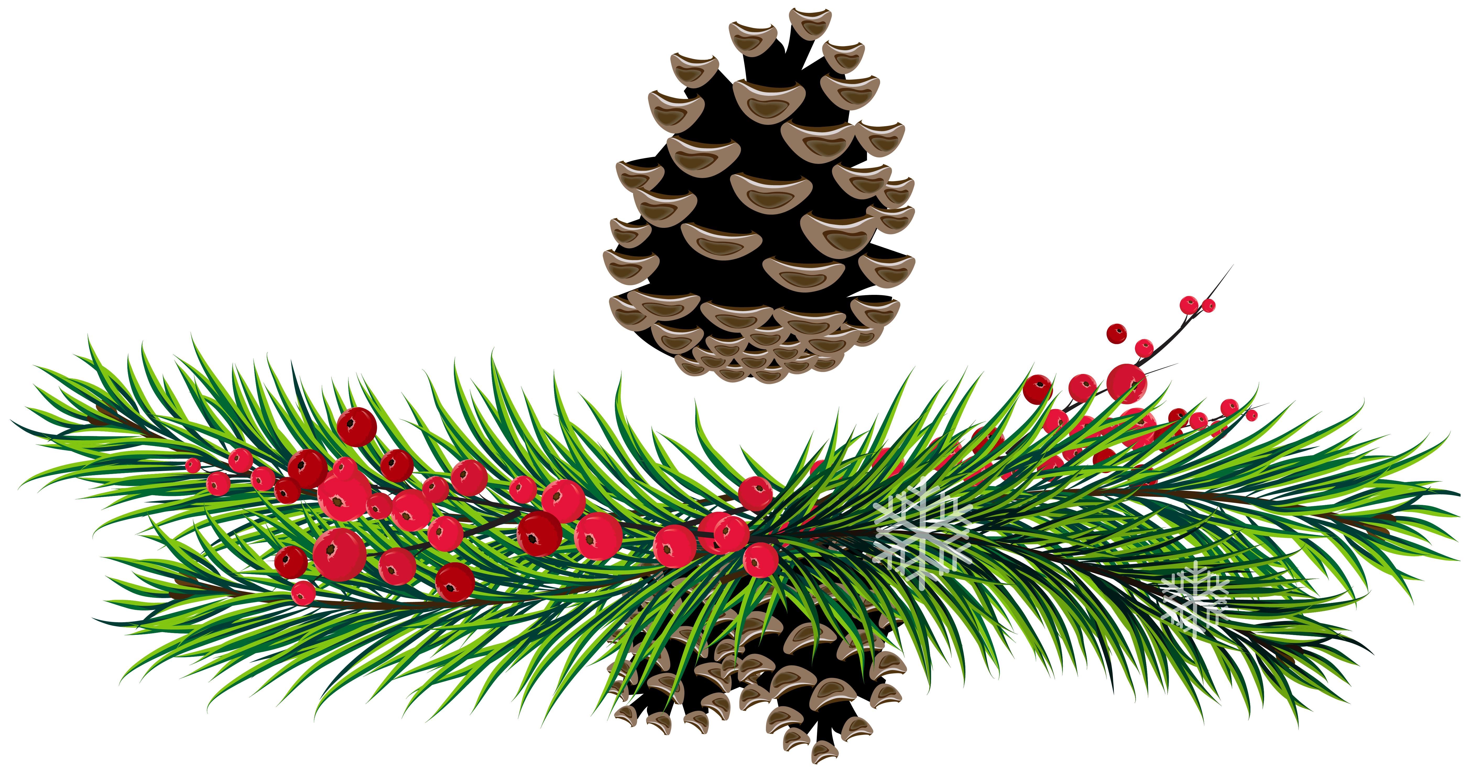 clipart transparent download Pine branches and cones. Garland vector evergreen