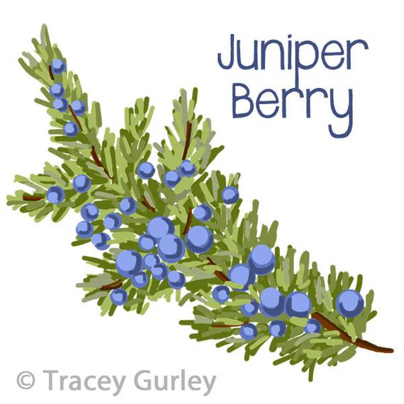 svg black and white stock Berry clipart juniper berry. Branch original art download.